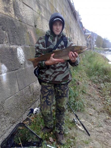 Losos obecný, 78 cm, cca 4 kg, 28.10.2010, Labe, vrácen vodě, Stan.Roudenský Žandov