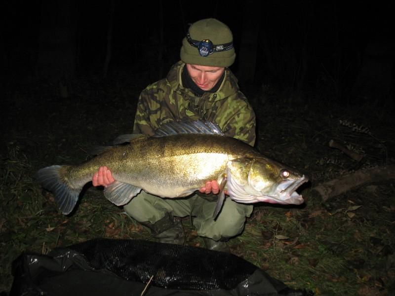 Candát obecný, 10 kg. 94 cm, Labe, 15.10.2010, Pavel Šída Liberec, vrácen vodě